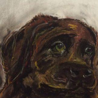 Hund med titlen Ukendt hund er malet med pastelkridt på papir